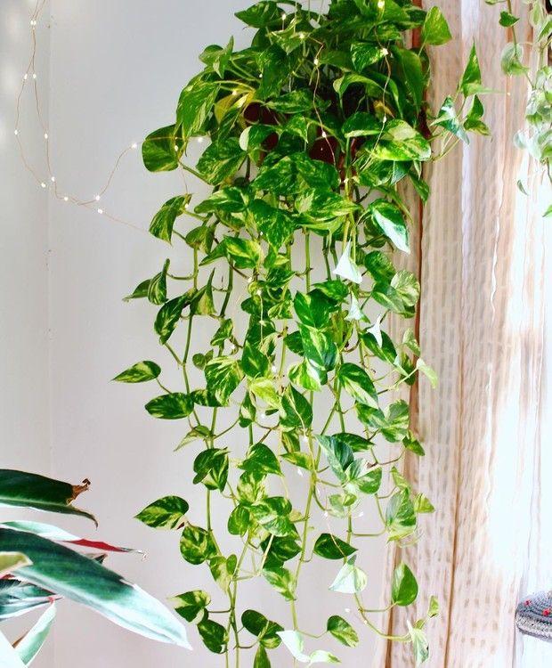 planta para banheiro
