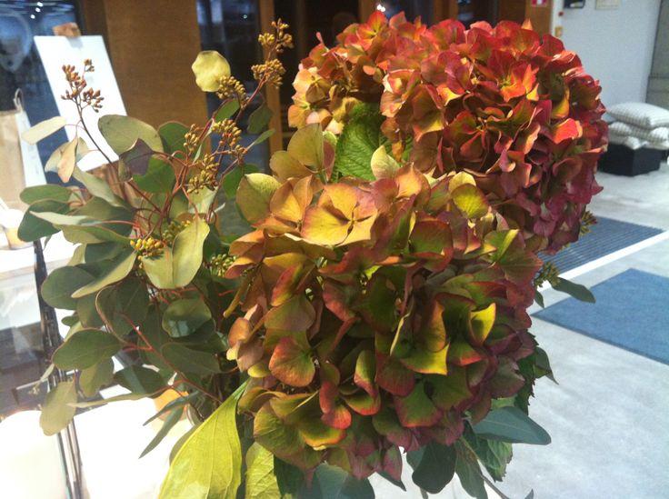 Autumn hydrangeas.