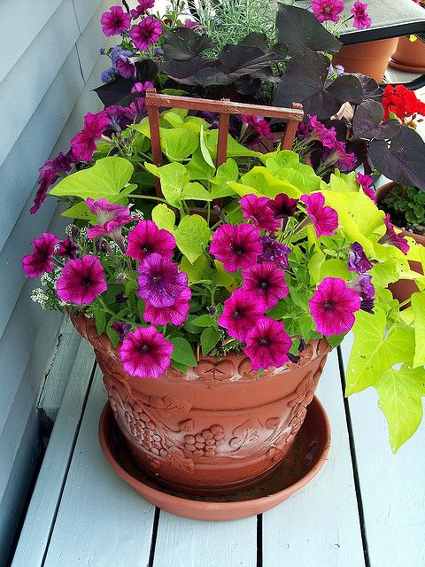 Front planters.  Love the colors. Pink wave petunias  lime green vines.  Yellow or coral bells too