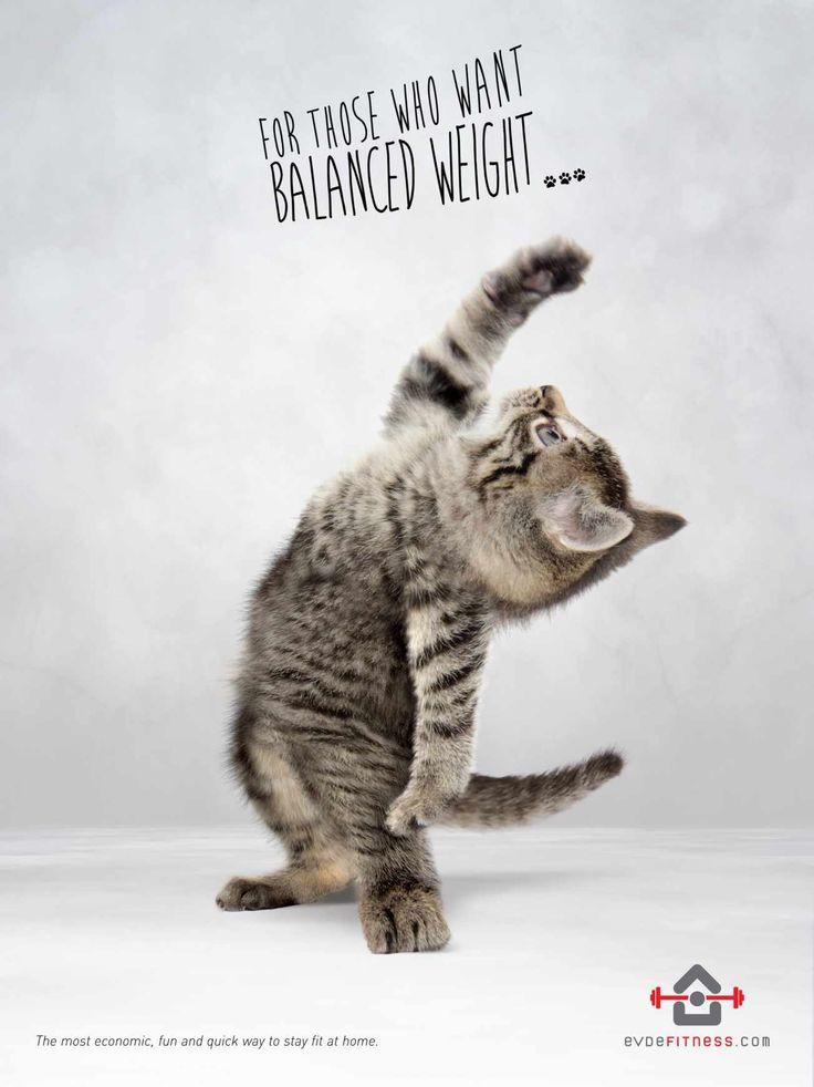 evdefitness.com: Balanced