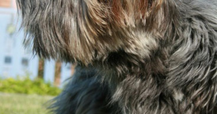 Remédios para alergias de cachorros