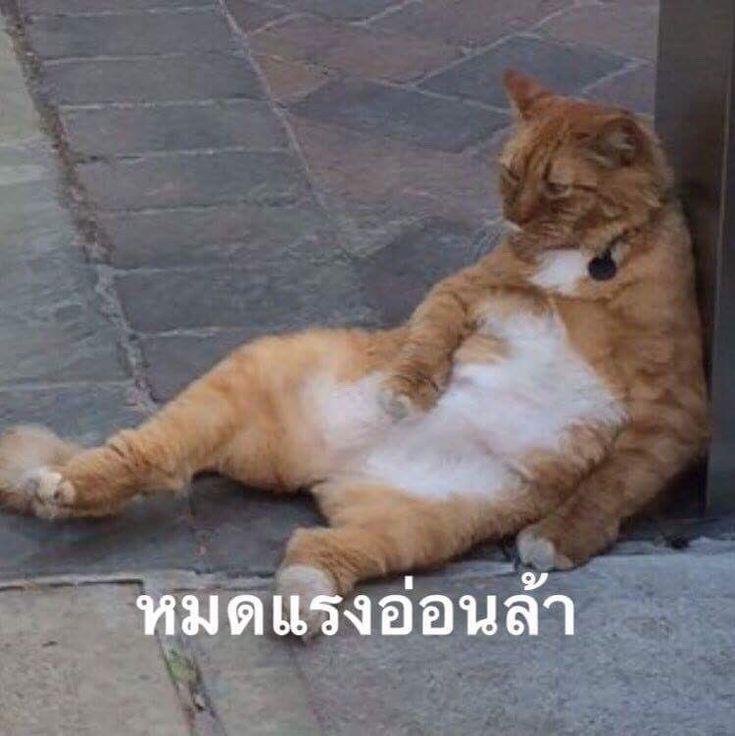 ป กพ นโดย Lady F ใน ม ม Meme ภาพส ตว ตลกๆ ร ปแมวขำๆ แมวตลก