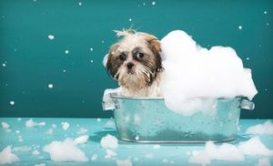 Groupon - $ 15 Dog Spa Bath Package w/ Bath, Ear Cleaning & Nail Trim at Happy Tails Pet Spa & Resort (Up to $35 Value) St. Rd 7/(441) Just So of Southern n Wellington/West Palm Bch, Fl  Expires 90 days after purchase. Limit 1 per person/dog, may buy 1 additional as a gift. Appt required. New clients only. Not valid for haircuts. Extra fee for dogs over 25lbs, flea or tick removal, dematting, de-shedding & heavy coats.