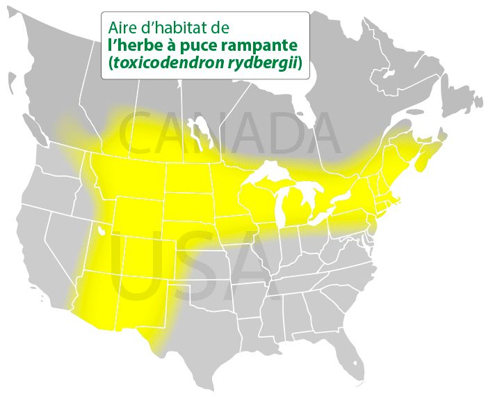 Aire d'habitat de l'herbe à la puce rampante (toxicodendron rydbergii)