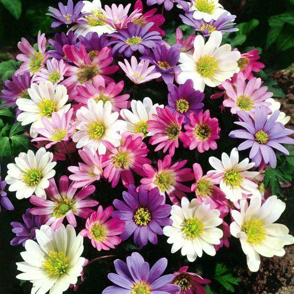 76 Besten Gartenpflanzen Bilder Auf Pinterest | Landschaftsbau