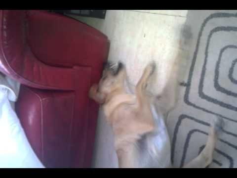 Treating Feline Distemper Naturally