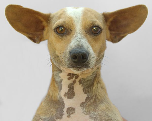 Get To Know Partnership For Pets Of East Texas Animal Rescue Pet Adoption Pets