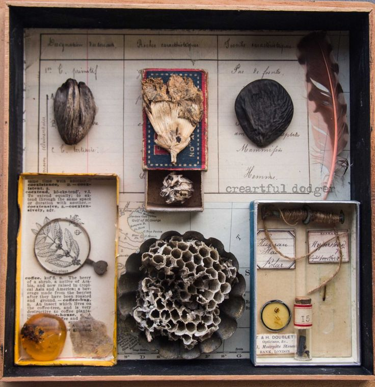 Cabinet of curiosities assemblage