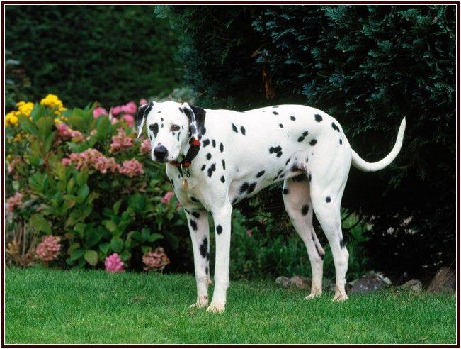 Crewy Havahart Wireless Dog Fence Reviews