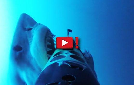 Le terribili immagini mostrano un grande squalo bianco all'attacco! CLICCA QUI E GUARDA TUTTO IL VIDEO!