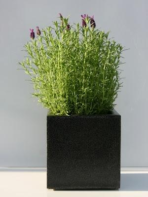 Planters / doniczki. Willow House