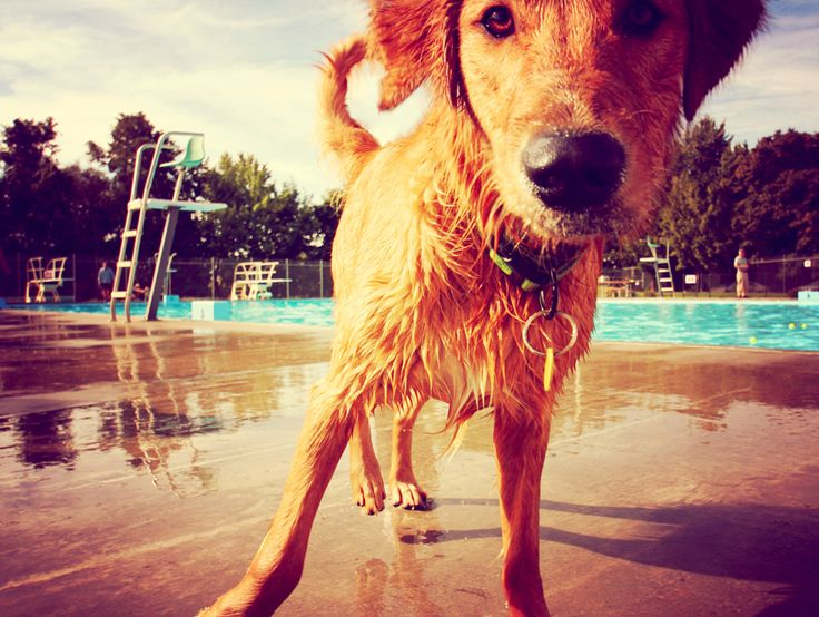 Just because we do the 'dog paddle' doesn't mean your furry friend can swim. Read about pet water safety here. #JacksonLake #watersafetypets