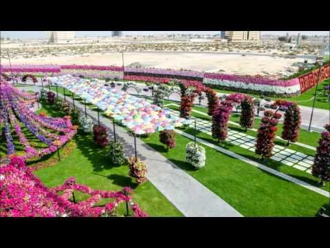 Walk around the newly opened Miracle Garden - The largest natural flower garden in the world
