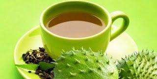 manfaat daun sirsak untuk kesuburan cara mengolah jus sirsak air rebusan teh untuk sperma pria dan wanita