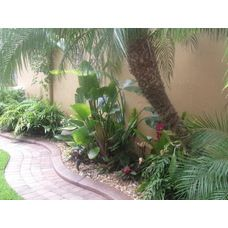 Pygmy palms and tropical shrubs