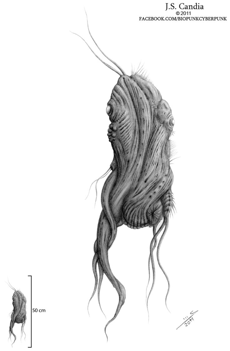 """TITLE: """"Shoggoth embryo"""". Just one of my representations in embryo stage of the creatures described in H.P. Lovecraft´s """"At the mountains of madness"""" novel. #lovecraft #creature #shoggoth #monster #embryo #squid #octopus #horror #draw #pencil #rendering #sketch #alien #cthulhu"""