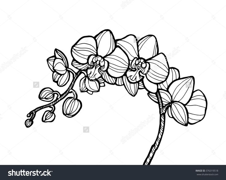 Exotic Orchid Flower, Forest Wild Plant. Vector Engraving Botany Artwork. Coloring Book Page For Adult. Bohemia Concept For Invitation Card, Ticket, Branding, Boutique Logo, Label, Emblem. Black White - 376319518 : Shutterstock
