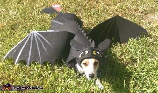 DIY Toothless Dragon Dog Costume - 2014 Pet Costume Contest.  Kado would never wear this- need simpler