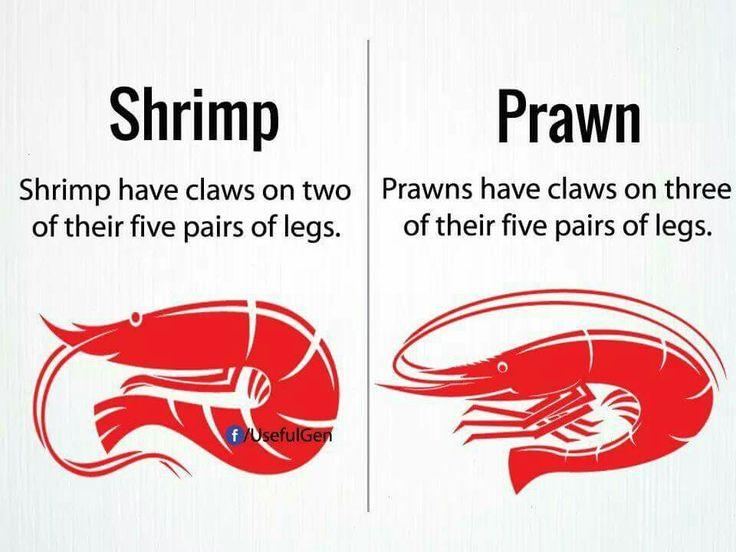 Shrimp vs prawn | lifelong learning | English vocabulary ...