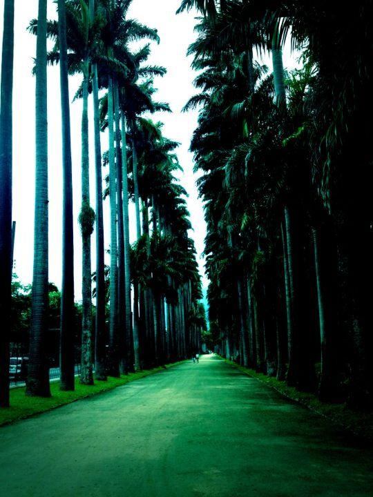 Instituto de Pesquisas Jardim Botânico do Rio de Janeiro em Rio de Janeiro, RJ