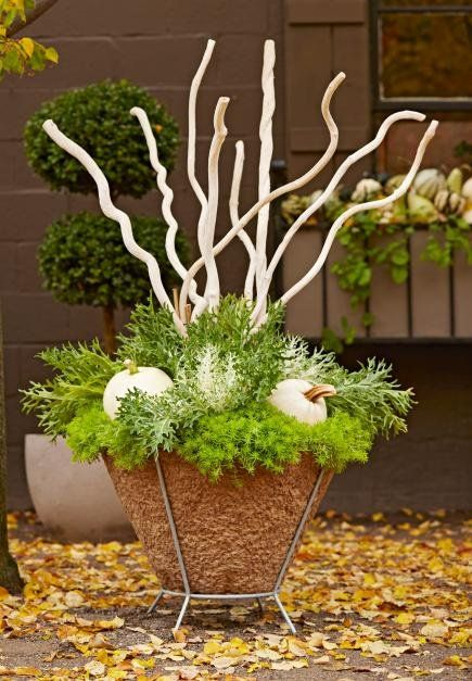 Dried banana stems, bleached white, create eye-catching height in a fall container. Sedum 'Angelina' spills over the edge while the frilly leaves of 'Peacock White' kale wrap around white Lumina pumpkins.