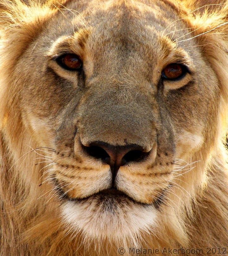 Wildlife life - love it!
