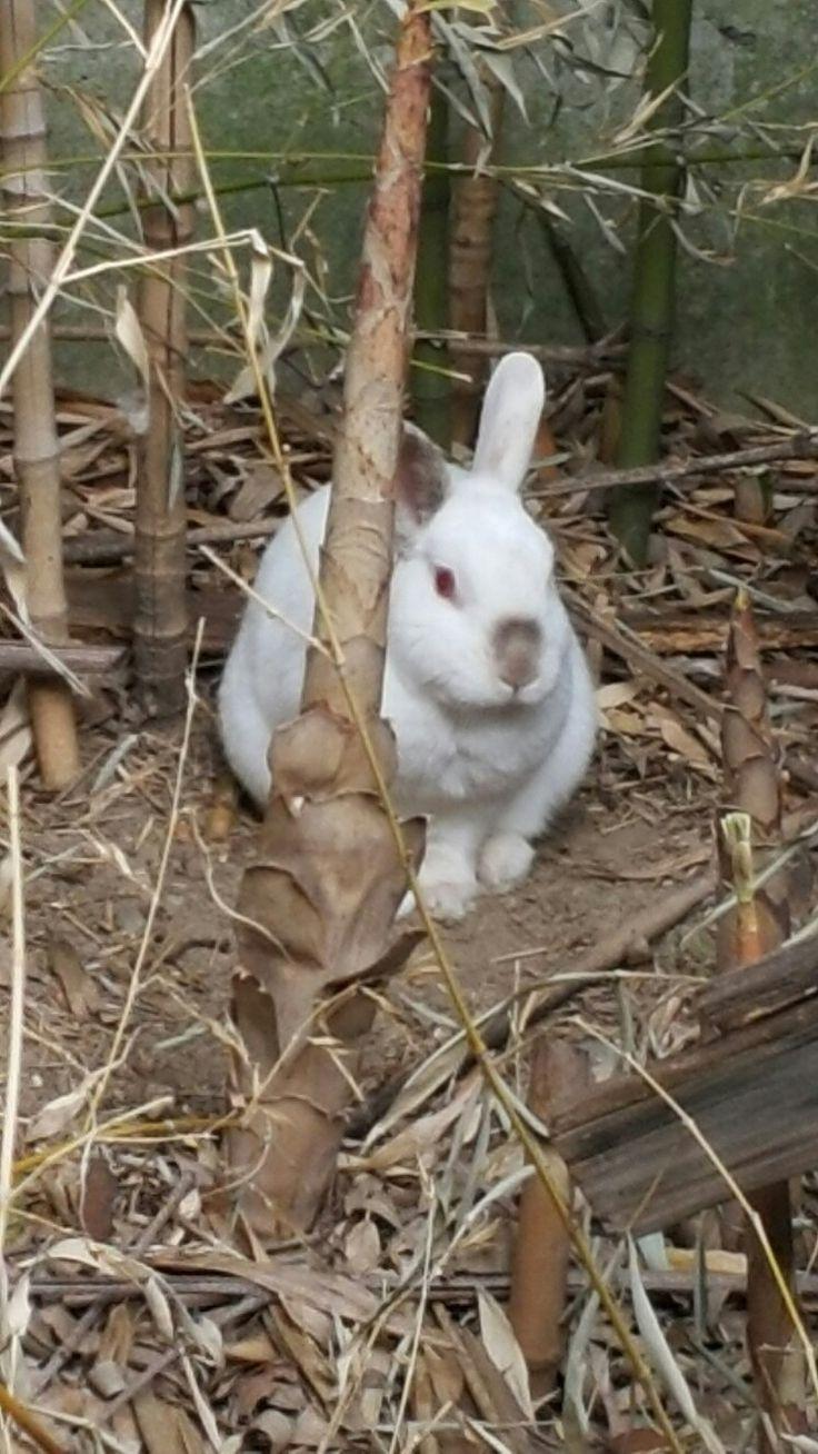 Il mio coniglio nel boschetto dei bambu'.....