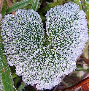 Beautiful Photos of Hearts in Nature - Outdoor - AccuWeather.com