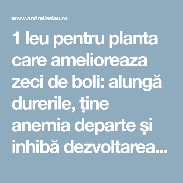 1 leu pentru planta care amelioreaza zeci de boli: alungă durerile, ține anemia departe și inhibă dezvoltarea celulelor canceroase