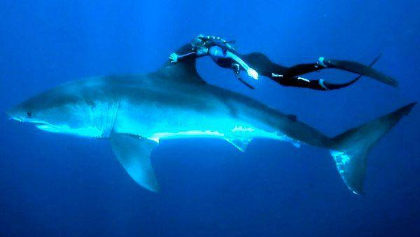 Tiburón y humano ;)