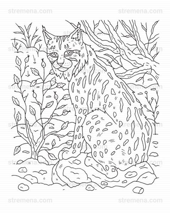 Lynx Wildcat And Owl Printable Animal Coloring Pages Animal