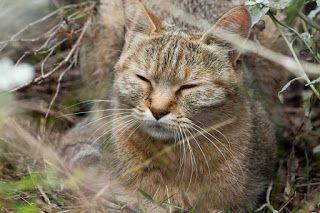 Nina K. FOTOGRAFIA: Dzikie koty Afryki Południowej - Tenikwa