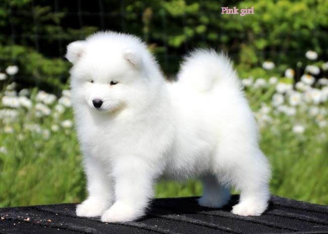 Stunningly, Adorable Sammy Puppy