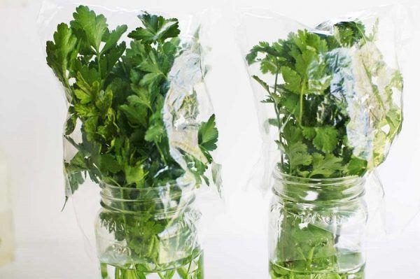 Cultivar hierbas aromáticas y verduras en casa es una bonita experiencia que resulta muy agradable y tremendamente práctica. Muchas de ellas pueden iniciar su crecimiento incluso en agua por lo que…