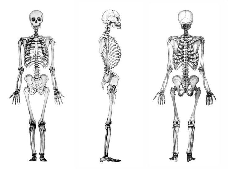 1000+ ide tentang Esqueleto Humano Partes di Pinterest | Partes ...