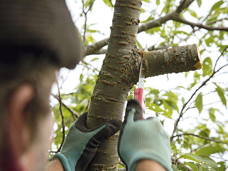 Såga av en kraftig gren steg 3