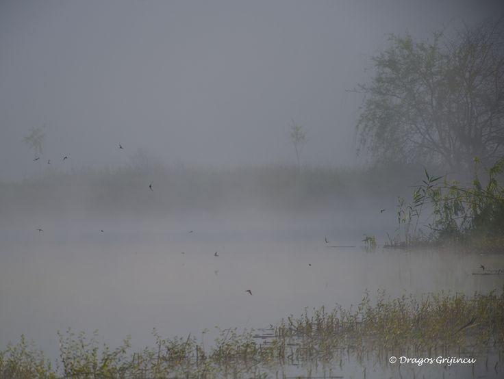 Ceata pe lac