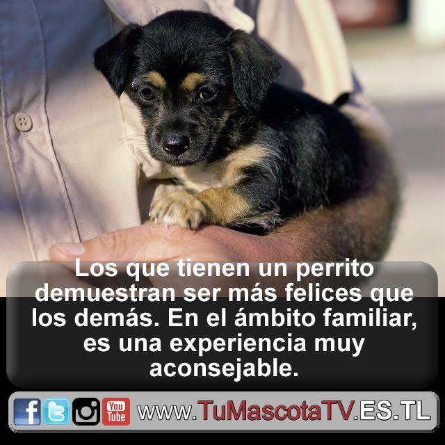 #gatitos #perritos @estherm22066461