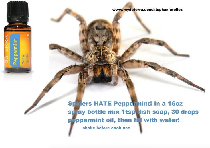 stop spiders from coming in the house essential oils