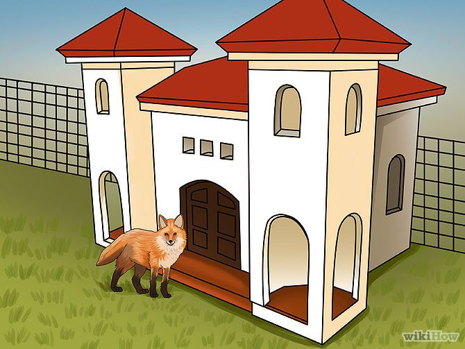 How to care for a Pet Fox!