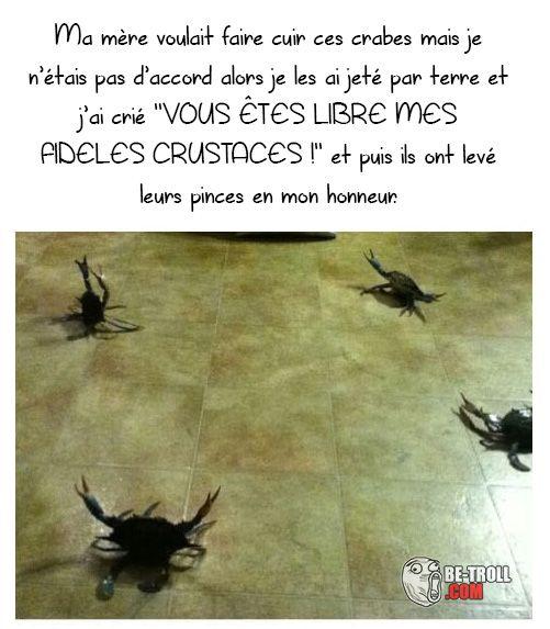 Je suis le seigneur des crabes ! - Be-troll - vidéos humour, actualité insolite
