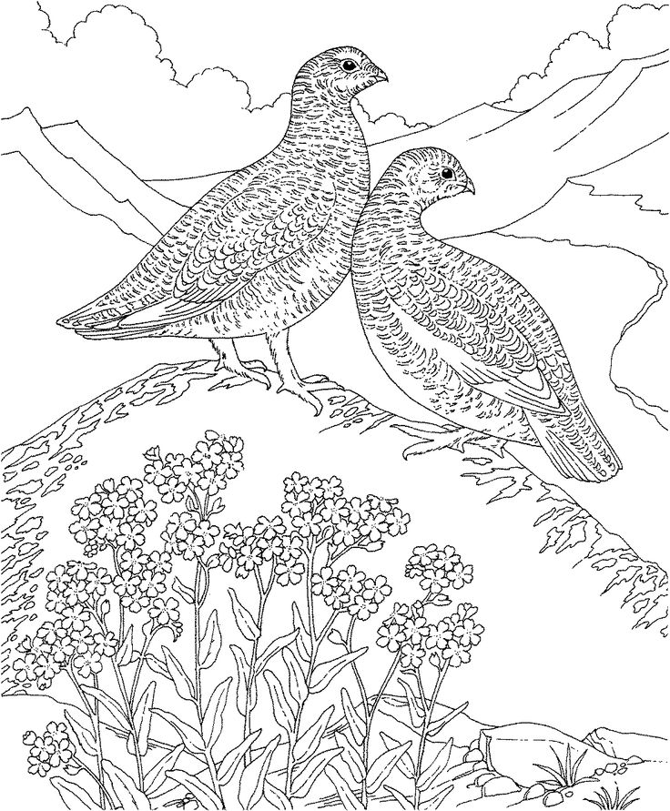 Free Printable Coloring Page - Alaska State Bird and Flower: Willow Ptarmigan, Forget-me-not,