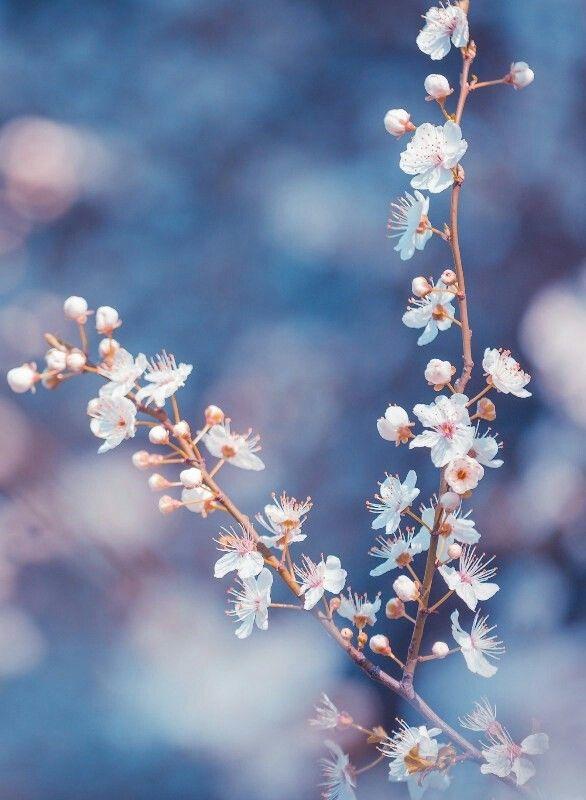 The 103 best flowers images on pinterest wedding ideas floral branch of white flowers hd wallpaper by doantrangnguyen mightylinksfo