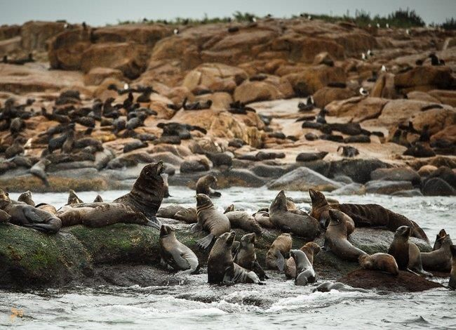 Лобос – #Уругвай (#UY) Лобос - не особенно крупный по размерам остров у побережья Уругвая, где обитает самая большая колония морских львов во всей Южной Америке. http://ru.esosedi.org/UY/places/1000237582/lobos/