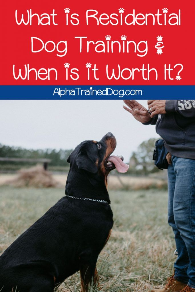 What Is Residential Dog Training And When Is It Worth It Read On