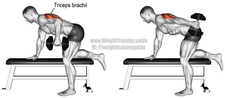 Les 56 meilleures images du tableau Arm Exercises sur Pinterest   Exercices de musculation ...