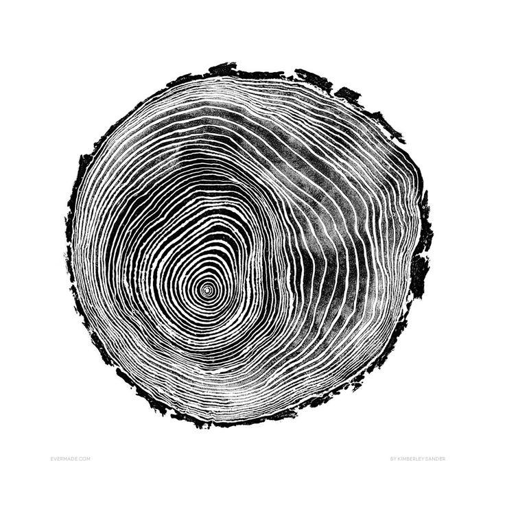 Signed Scots Pine Print | Tree Rings | Art Prints & T-shirts from Evermade