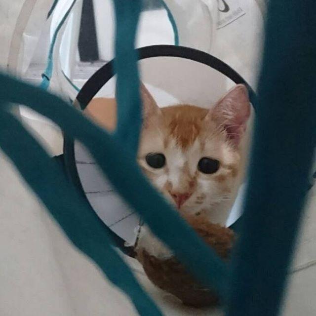 ミニー🐈#chuty#srilanka#temple#cat#cats#catstagram#cute#cutie#kitty#eyes#gato#gatto#kucing#katze#popoki#happy#Love#straycat #minnie#愛娘#愛猫#愛猫家#ミニー #ミニーちゃん#女の子#gril#おてんば娘 #大好き#かわいい #親バカ部