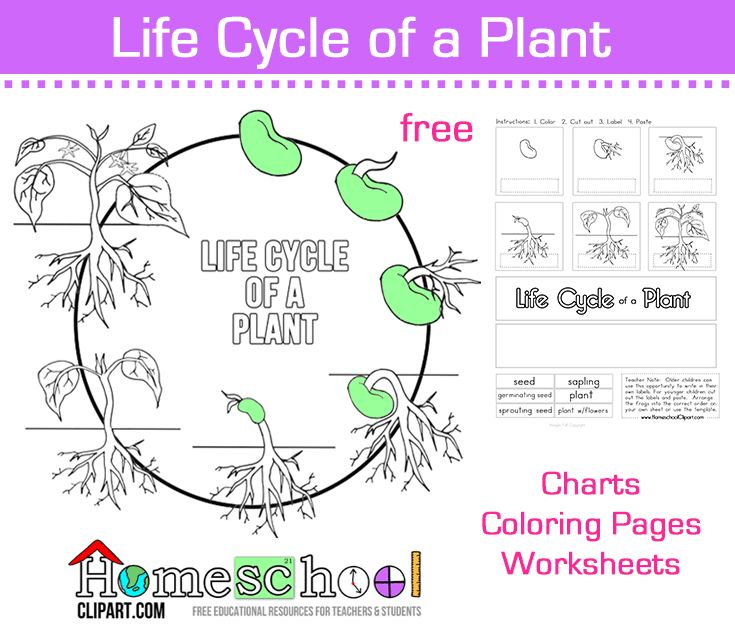 Science Worksheets Plants : Best images about plentiful plant unit on pinterest