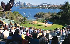 Ideas for things to do in Sydney on holiday - - - - - (pic: Taronga Zoo, Sydney Holidays)
